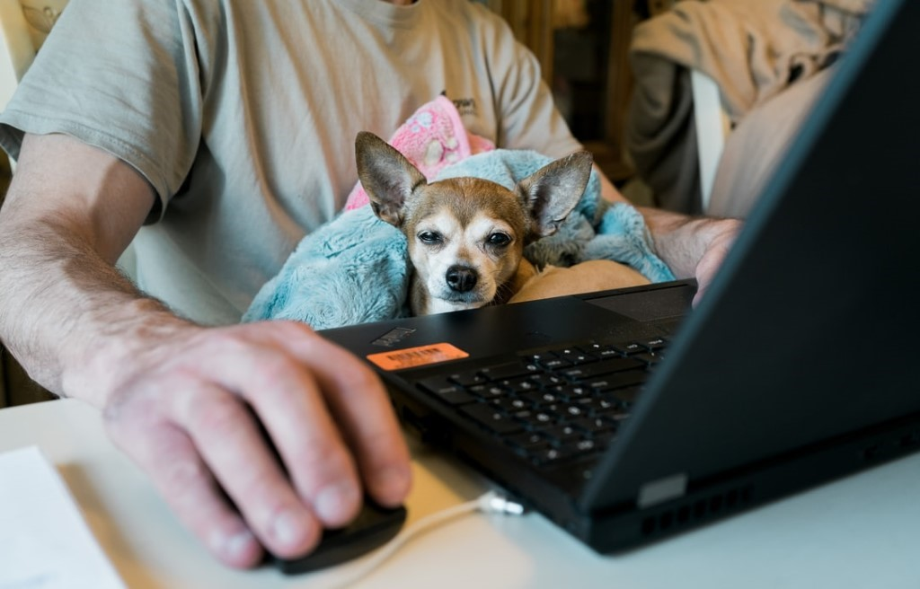 A dog sitting on the keyboard of a computer  Description automatically generated